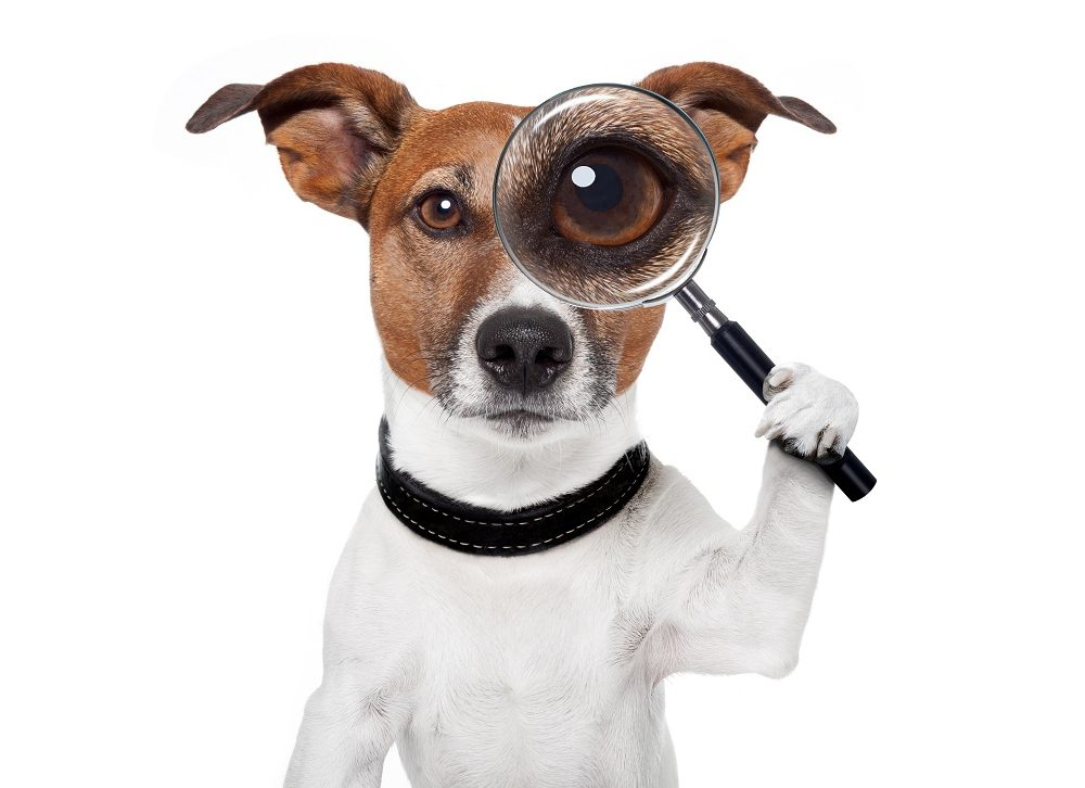 Scam of the Week: Man's Best Friend is a Scammer's Best Bait